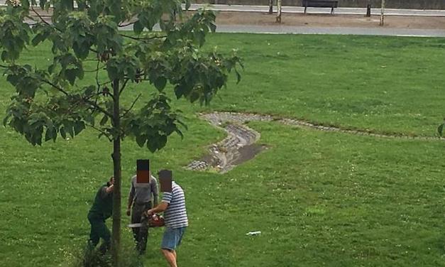 Dreist ! Werden Bäume für den Metropavillon gefällt ?