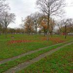 Zwischenruf: 100 Bäume für Trallala – was meint Ihr?
