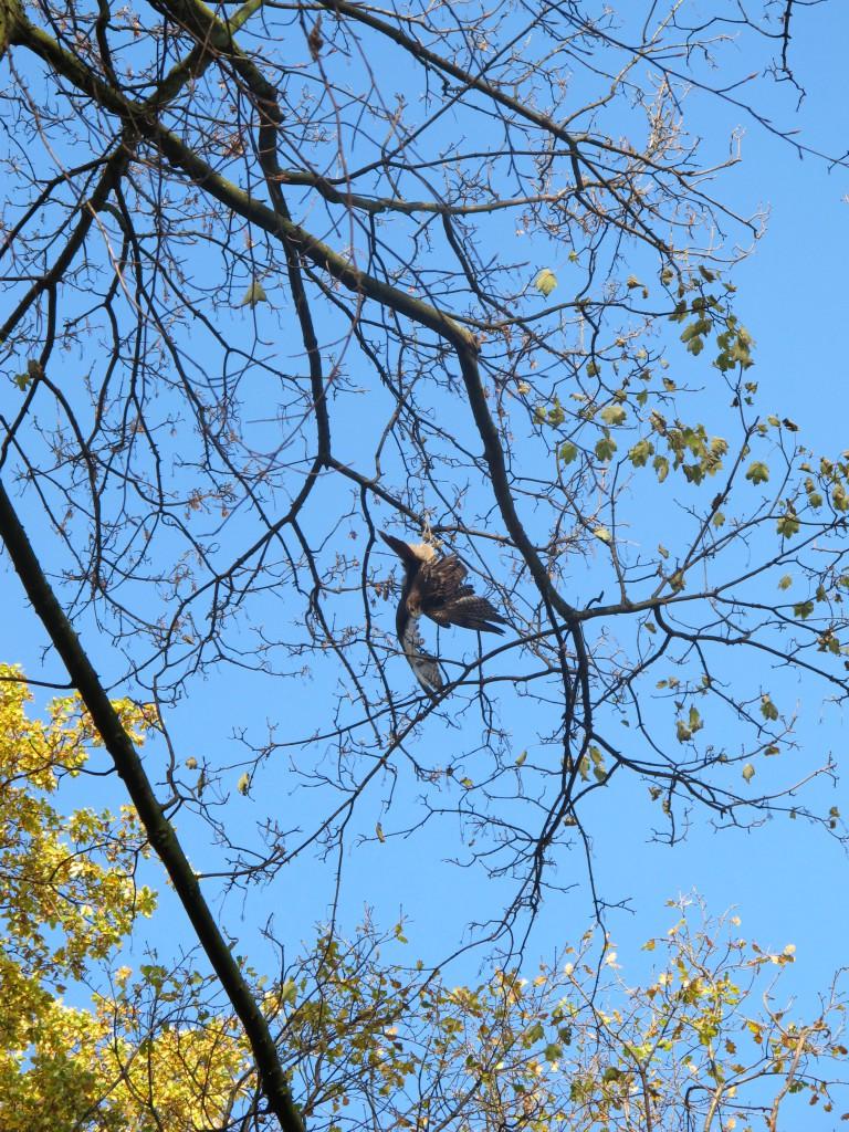 Kopfüber hegte der unerfahrene Vogel im Baum Foto: FEUERWEHR DÜSSELDORF