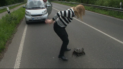 Stattliches Urzeitviech: Die Schnappschildkröte auf der Landstraße Foto: Günter Jungmann