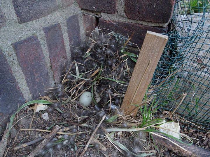 Zerstörtes Nest