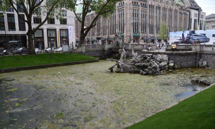 Kö-Graben durch Algen verdreckt