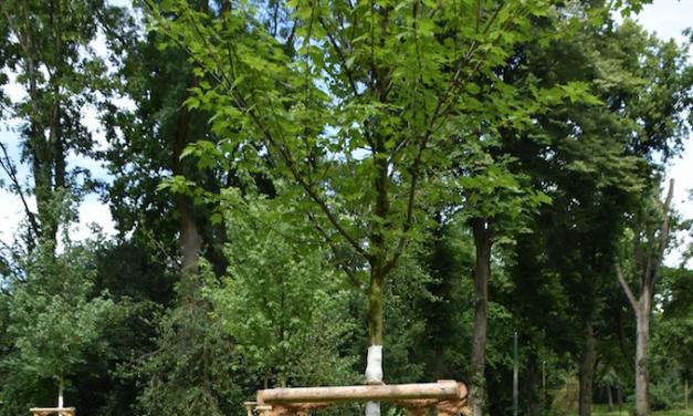 Sechs Eimer für euren Baum