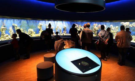 Das Aquazoo Löbbecke Museum ist wieder geöffnet