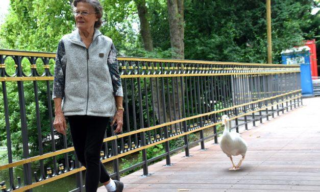 Düsseldorfer Schwanenmutter erhält Sonderpreis