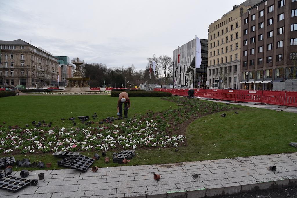 Pfanzarbeiten am Corneliusplatz Foto: LOKALBÜRO