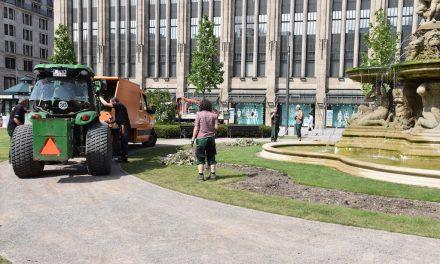 Erstbepflanzug am Corneliusplatz wurde entfernt