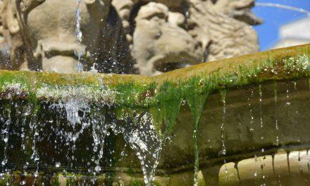 Kö: Es grünt so grün am Schalenbrunnen