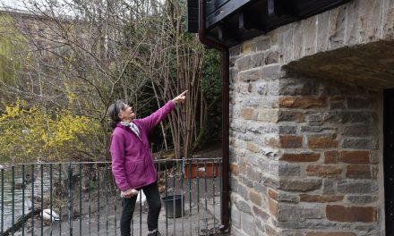 Neue Regenwasserrohre am Schwanenhaus