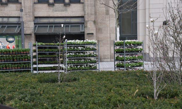 Corneliusplatz bekommt Frühjahrbepflanzung