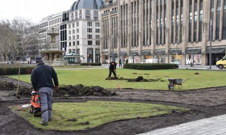 Frühlingsbepflanzung für den Corneliusplatz
