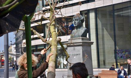Zwei Blauglockenbäume für den Schadowplatz