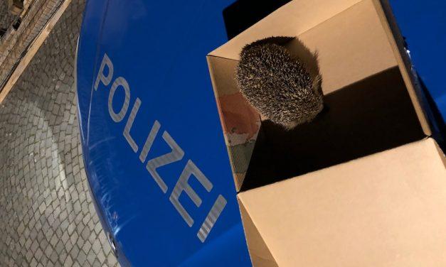 Igeliger Einsatz für die Polizei