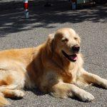 Hitzefalle: Tiere nicht im geparkten Auto lassen