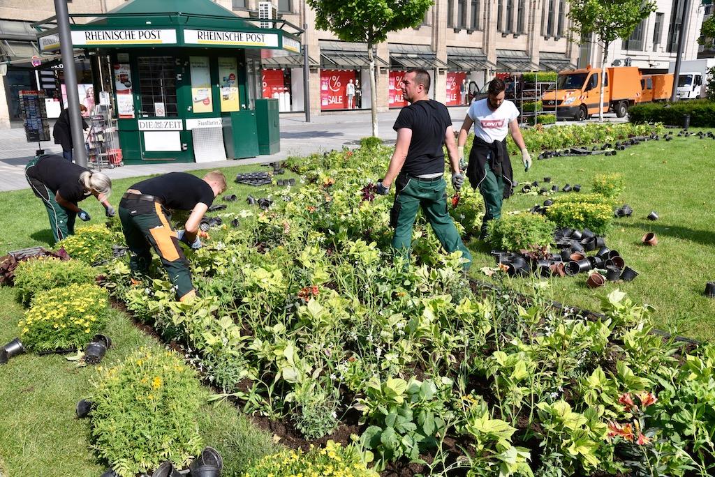 Mitarbeiter des Gartenamtes bei der Pflanzug Foto: LOKALBÜRO