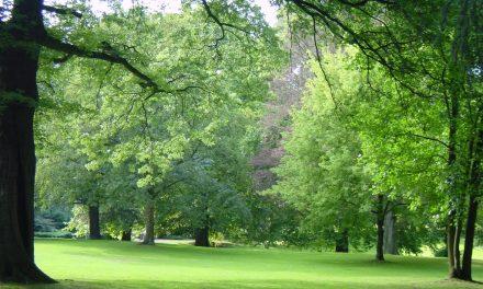 Sommerspaziergang durch den Elbroichpark