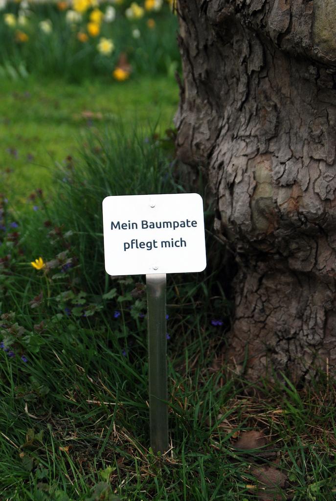 """Das Schild mit der Aufschrift """"Mein Baumpate pflegt mich"""" verhindert versehentliches Abmähen des Aufwuchses an der Baumscheibe,(c)Landeshauptstadt Düsseldorf/Gartenamt"""