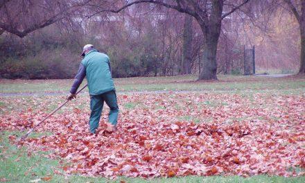 Stadtgärtner machen Düsseldorfs Parkanlagen winterfest