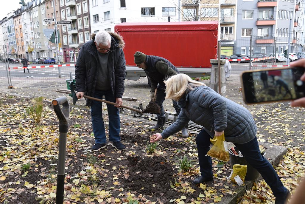 Zwiebeln pflanzen Foto: LOKALBÜRO