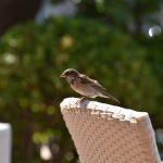 Tipps zur Winterfütterung heimischer Vögel