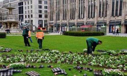 Frühlingserwachen in Düsseldorfs Grünanlagen