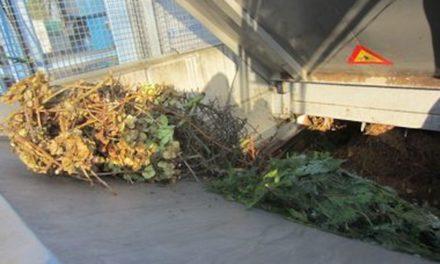 Umweltamt weitet mobile Grünschnittsammlung aus