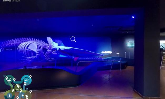 Virtuelle Tour durch das Aquazoo Löbbecke Museum