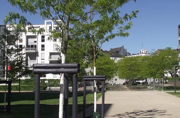 Anhaltende Trockenheit zeigt Spuren im Stadtgrün