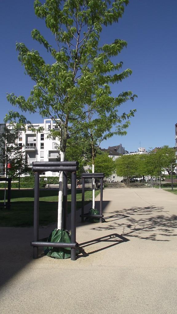 Mithilfe von regelmäßigen Wässerungen und dem Anbringen von Wassersäcken versucht das Gartenamt die Baumschäden in Grenzen zu halten,(c)Landeshauptstadt Düsseldorf/Gartenamt