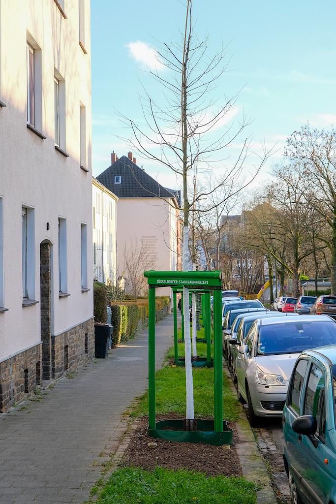 Archivbild: Pflanzung im Rahmen des Stadtbaumkonzepts,(c)Landeshauptstadt Düsseldorf/M. Gstettenbauer