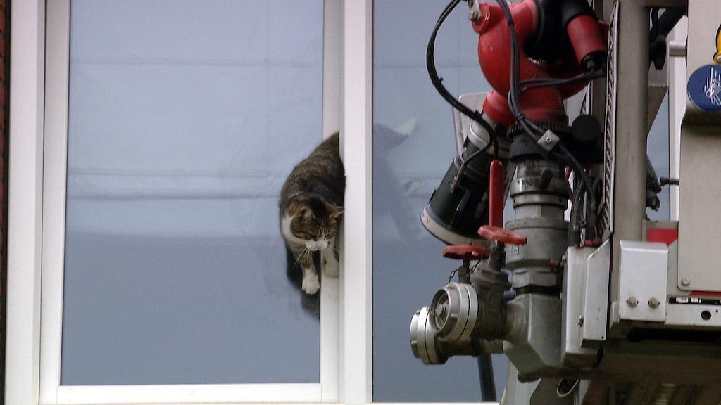 Feuerwehr rettet Katze Foto: Günter Jungmann