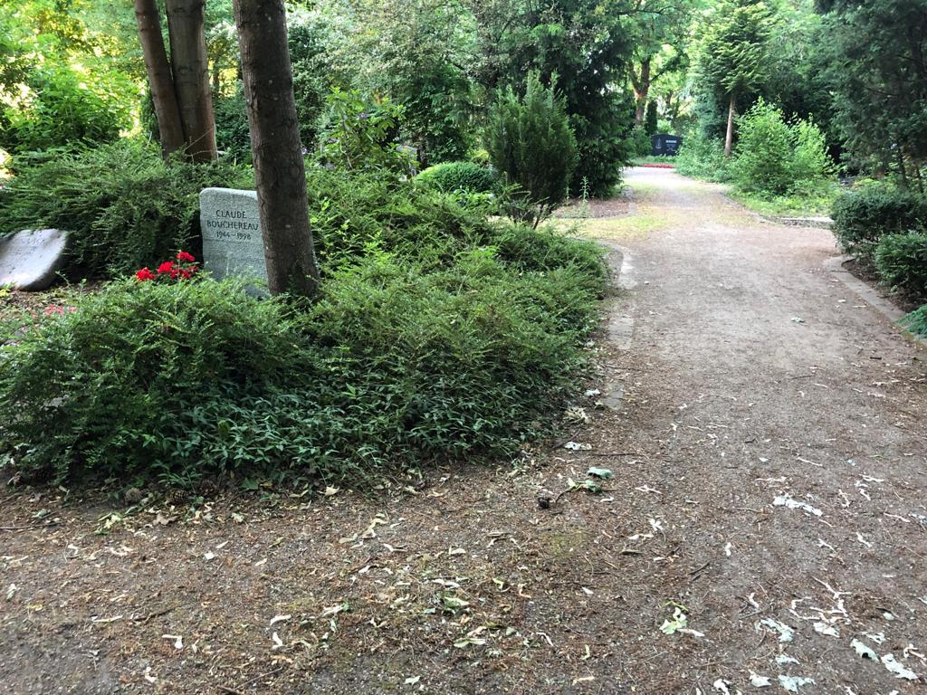 Dieser Busch hat den Grabstein verdeckt, darin brütetet die Amsel Foto: LOKALBÜRO