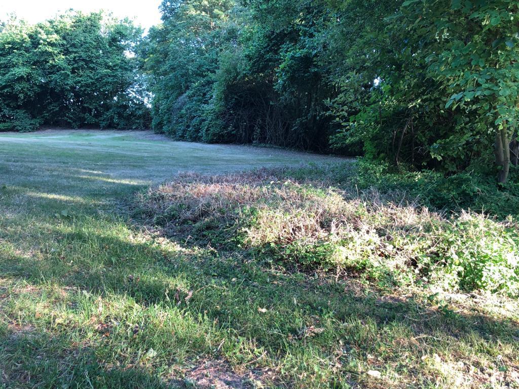 Was jetzt noch 15 cm hat, war vorher ein stattlicher Busch Foto: LOKALBÜRO