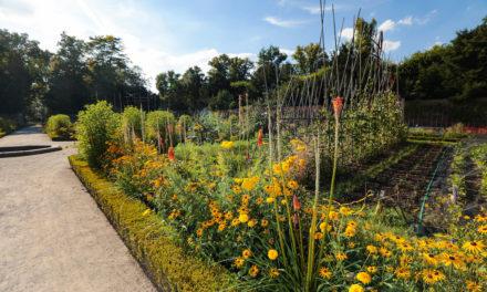 Staudenpracht im Nordpark und im Schlosspark Benrath