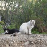 Katzenkastration für den Tierschutz