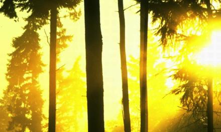 Umweltamt warnt vor steigender Ozonbelastung
