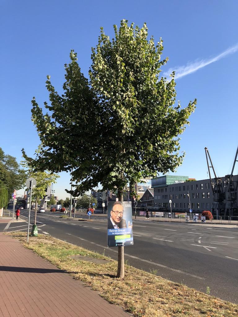 Nur Bild am Baum - braucht kein Mensch Foto: LOKALBÜRO
