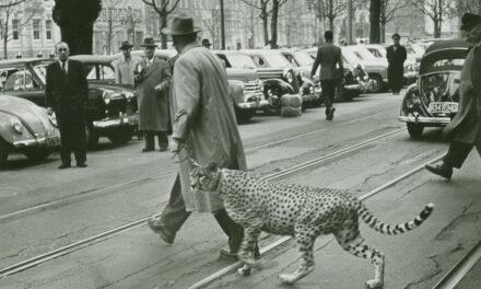 Düsseldorf in den 50er Jahren — Die junge Landeshauptstadt