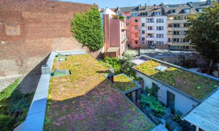 Mehr grüne Dächer, Fassaden und Innenhöfe für Düsseldorf