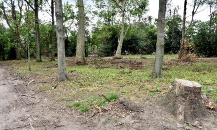 1.356 Bäume müssen in diesem Winter stadtweit gefällt werden
