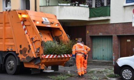Die AWISTA holt die Tannenbäume ab