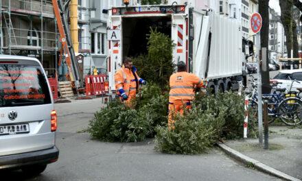AWISTA holt seit heute die Weihnachtsbäume ab