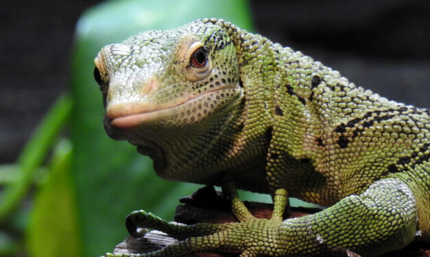 Aquazoo Löbbecke Museum tritt globaler Koalition für Artenvielfalt bei