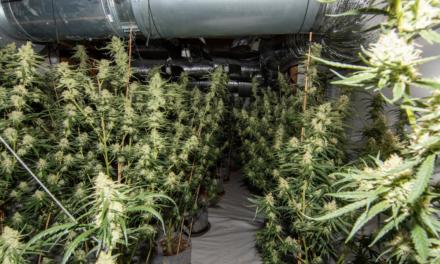 Wersten — Drogenermittler finden Cannabisplantage in Wohnhaus