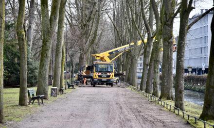 Wegesanierung und Pflanzarbeiten im östlichen Hofgarten  haben begonnen