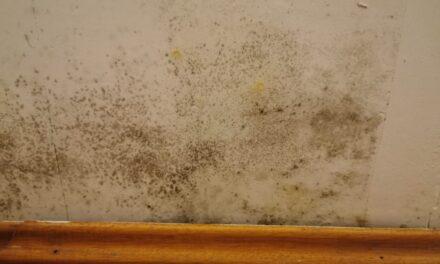 Was tun bei Schimmel in Wohnräumen?