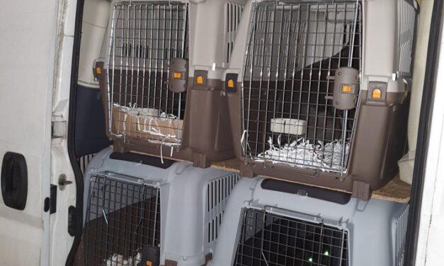 Verdacht des illegalen Tiertransports