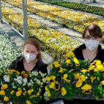 Auftakt zur Frühlingsbepflanzung: Fast 230.000 neue Blumen blühen bald in derStadt