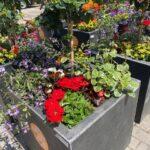 Blumenoasen für den Düsseldorfer Norden