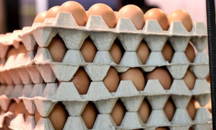 Eier zu Ostern — aber bitte frisch!